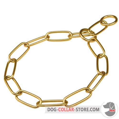 Brass Dog Collar for Training Sessions