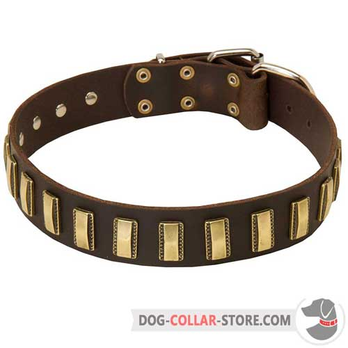 Training Leather Dog Collar with Brass Plates