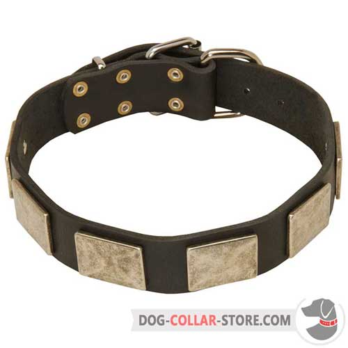 Leather Dog Collar Adorned with Massive Nickel Plates