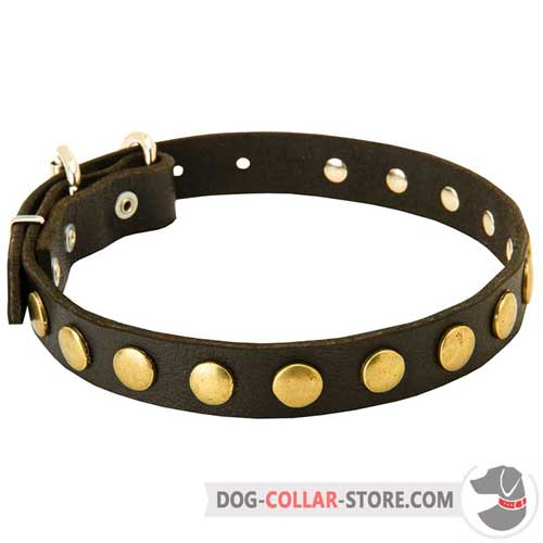 Leather Dog Collar Decorated with Fabulous Brass Studs