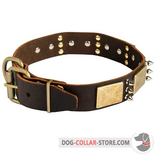 Decorated Leather Dog Collar With Rust Resistant Brass Fittings