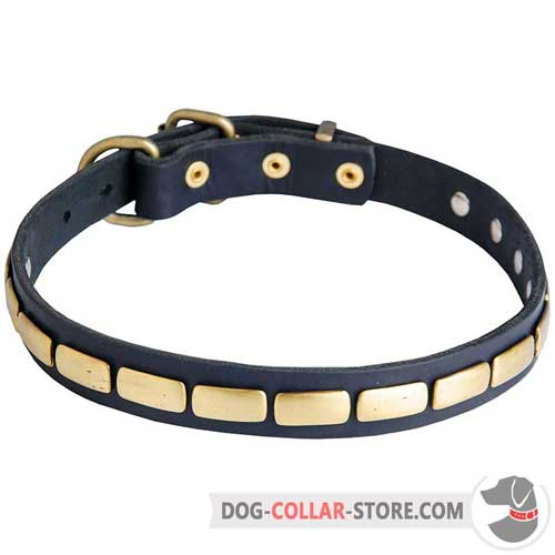 Leather Dog Collar with Gold-Like Brass Plates