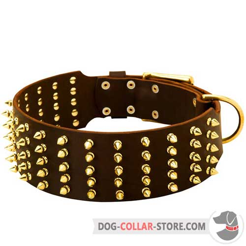 Extra Wide Leather Dog Collar with Gold Like Spikes