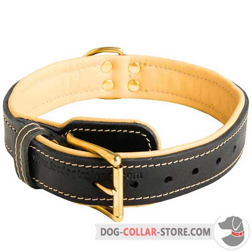 Nappa Padded Leather Dog Collar with Reliable Brass-Plated Buckle