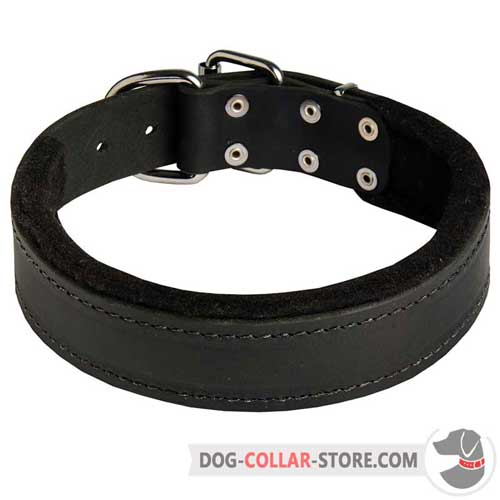 Felt Padded Wide Leather Dog Collar for Training Sessions