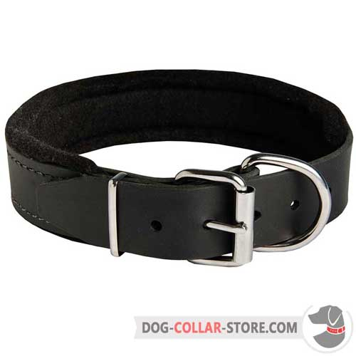 Padded Leather Dog Collar with Rust Proof Nickel Plated Hardware