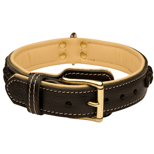 Walking Padded Leather Dog Collar with Strong Brass-Plated Buckle