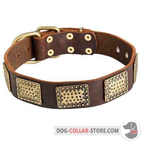 Stylish Leather Dog Collar Decorated with Vintage Brass Plates