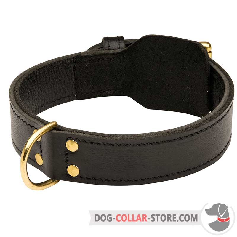 What Is Agitation Dog Collar