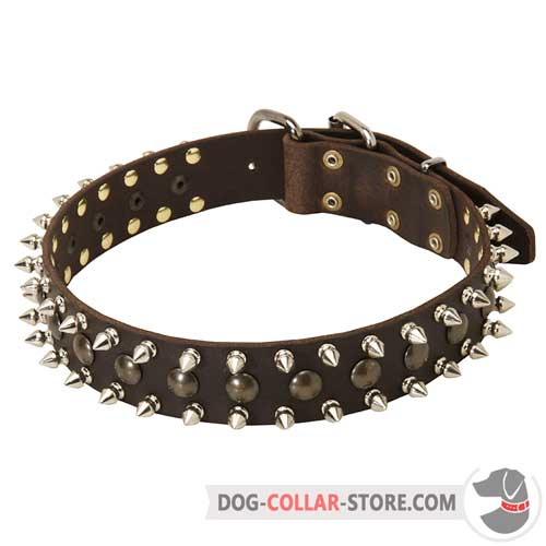 Walking Leather Dog Collar Adorned with Spikes and Studs