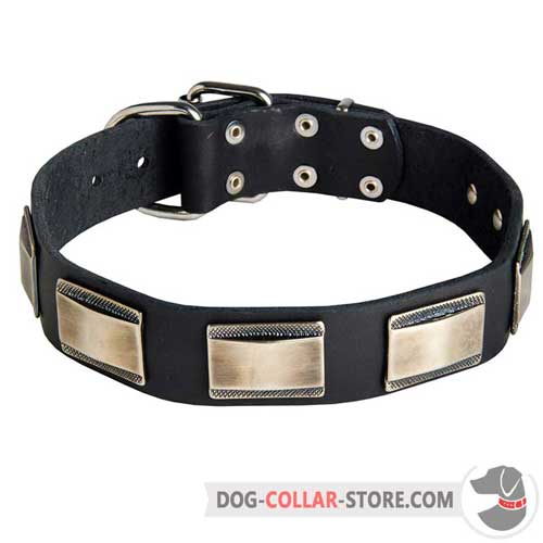 Hand-Decorated Leather Dog Collar for Daily Walking with Plates