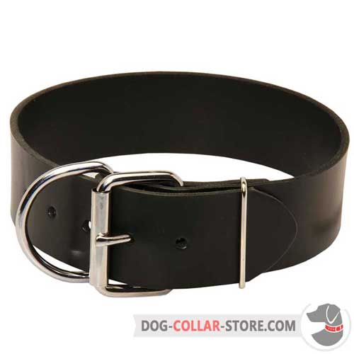 Extra Wide Leather Dog Collar with Nickel Plated Buckle