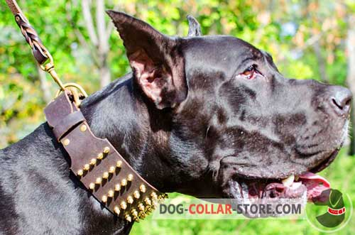 Wide Leather Dog Collar for Safe Walking