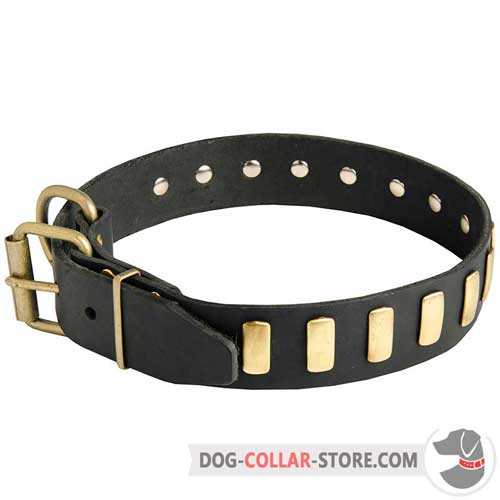 Handcrafted Leather Dog Collar with Brass Fittings and Decoration