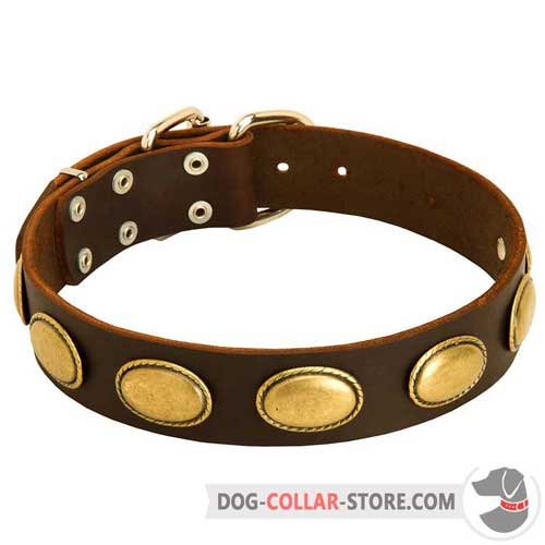 Leather Dog Collar with Massive Oval Brass Plates