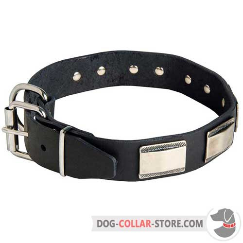 Wide Leather Dog Collar with Strong Nickel Fittings