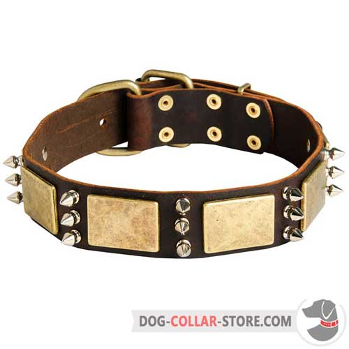 Leather Dog Collar Adorned with Brass Plates and Nickel Spikes