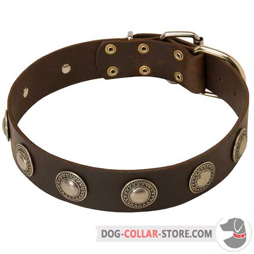 Walking Leather Dog Collar Decorated with Beautiful Silver Circles