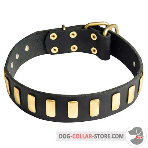 Stylish Leather Dog Collar with Vertical Brass Plates