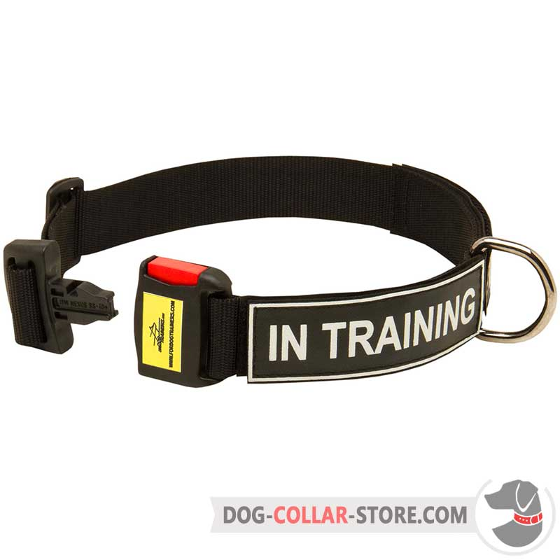 How Does The Perfect Dog Collar Work