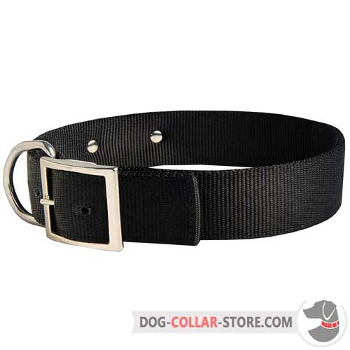 Nylon Dog Collar with Nickel Plated Buckle