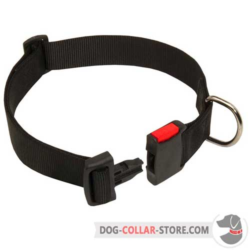 Nylon Dog Collar Multitasking