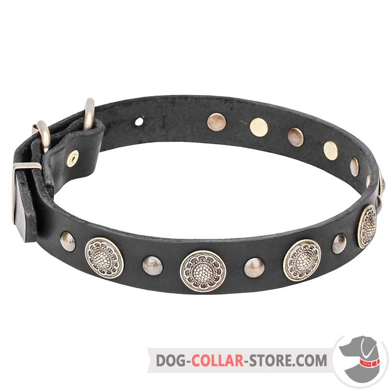 Dog collar with conchos