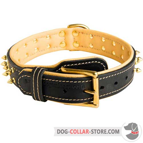 Spiked Design Padded Leather Dog Collar with Brass Buckle