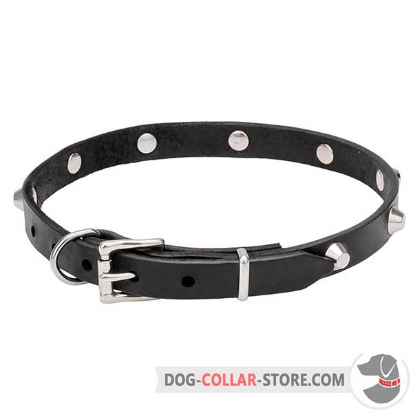 Dog Collar with chrome hardware and fittings