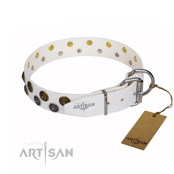 Stylish walking leather collar with studs for your four-legged friend