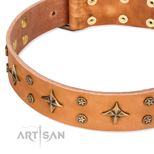 Full grain genuine leather dog collar with extraordinary adornments