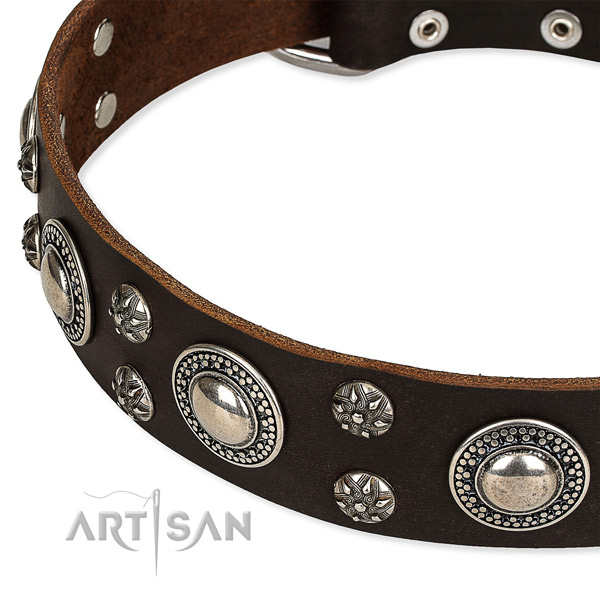 Quick to fasten leather dog collar with resistant chrome plated hardware