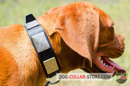 Leather Dogue De Bordeaux Collar Adorned With Massive Plates