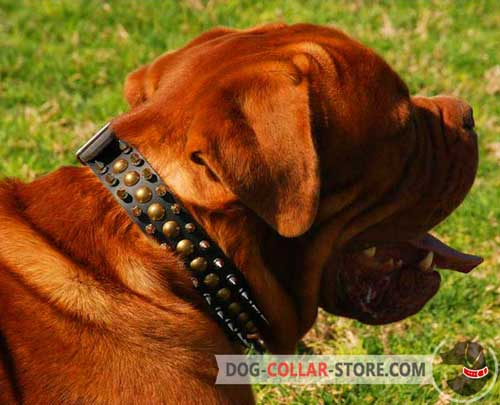 Spiked Dogue de Bordeaux Collar with Studs