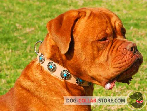 Leather Dogue de Bordeaux Collar with Decorations
