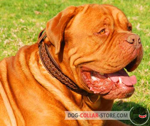 Braided Dogue de Bordeaux Collar