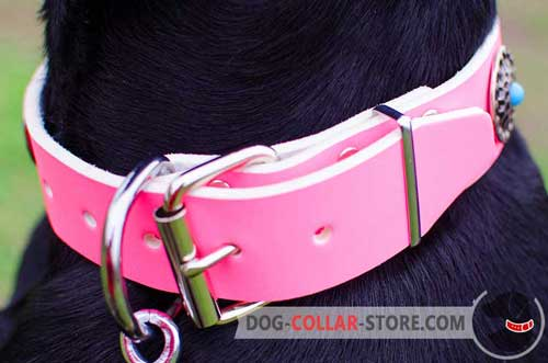 Corrosion Protected Nickel Plated Fittings On Leather Dog Collar
