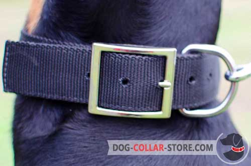 Reliable Nickel Plated Buckle on Nylon Dog Collar