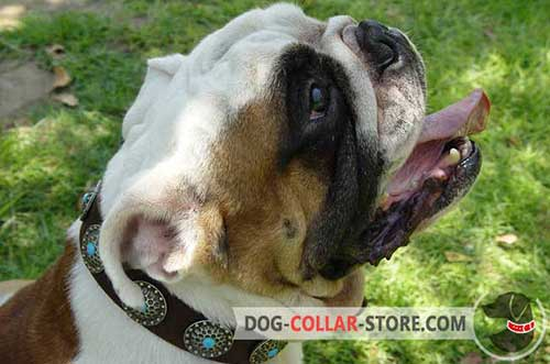 Designer Hand-Decorated Stylish Leather Dog Collar for English Bulldog