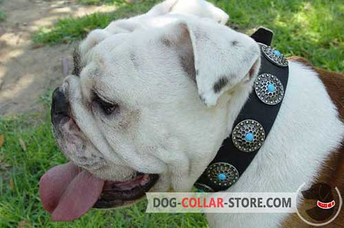 Hand-Decorated Stylish Leather Dog Collar for English Bulldog Training
