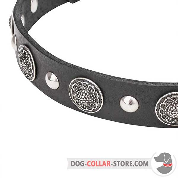 Chrome-plated Studs on Dog Collar