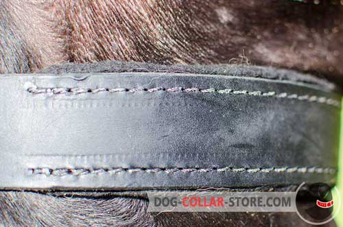 Soft Padding on Dog Collar
