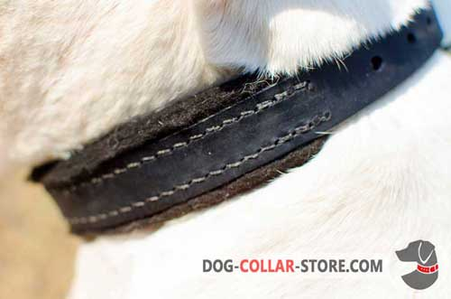 Extra Soft Felt Padding on Training Leather Dog Collar