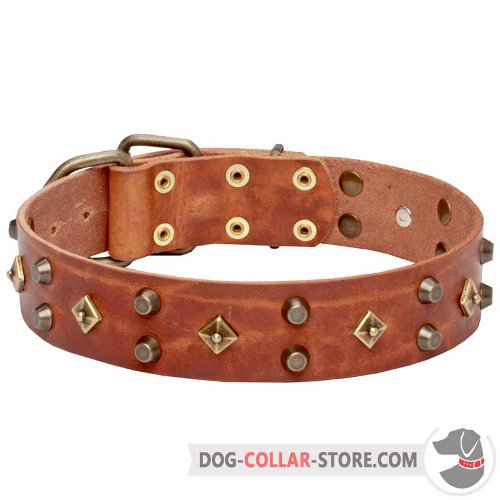 Leather Dog Collar designed for comfortable walking