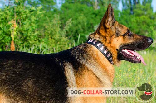 Adjustable Leather Dog Collar for German Shepherd with Nickel Plates