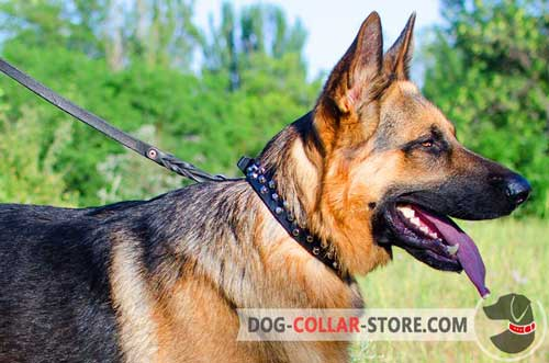 German Shepherd Collar with Nickel Studs