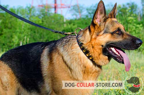 Gorgeous Leather German Shepherd Collar With Brass Plates