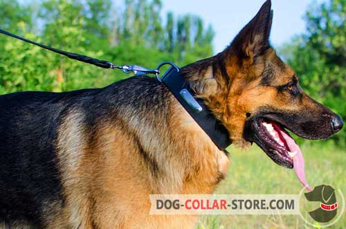Classic Leather German Shepherd Collar with Identification Plate