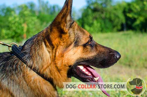 Classic Leather German Shepherd Collar for Walking