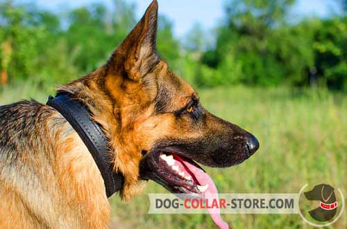 Strong Padded Leather German Shepherd Collar